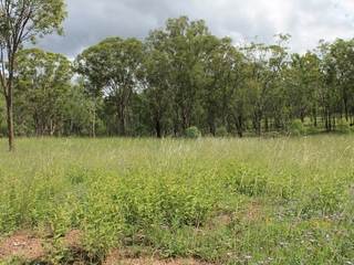 Lot 1 Leyburn-Cunningham Road Wheatvale, QLD 4370