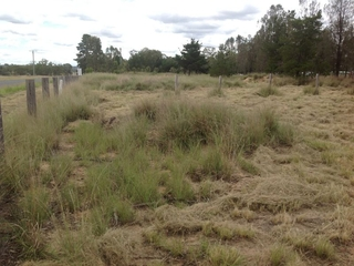 Lot 3 Hendon Deuchar Road Allora , QLD, 4362