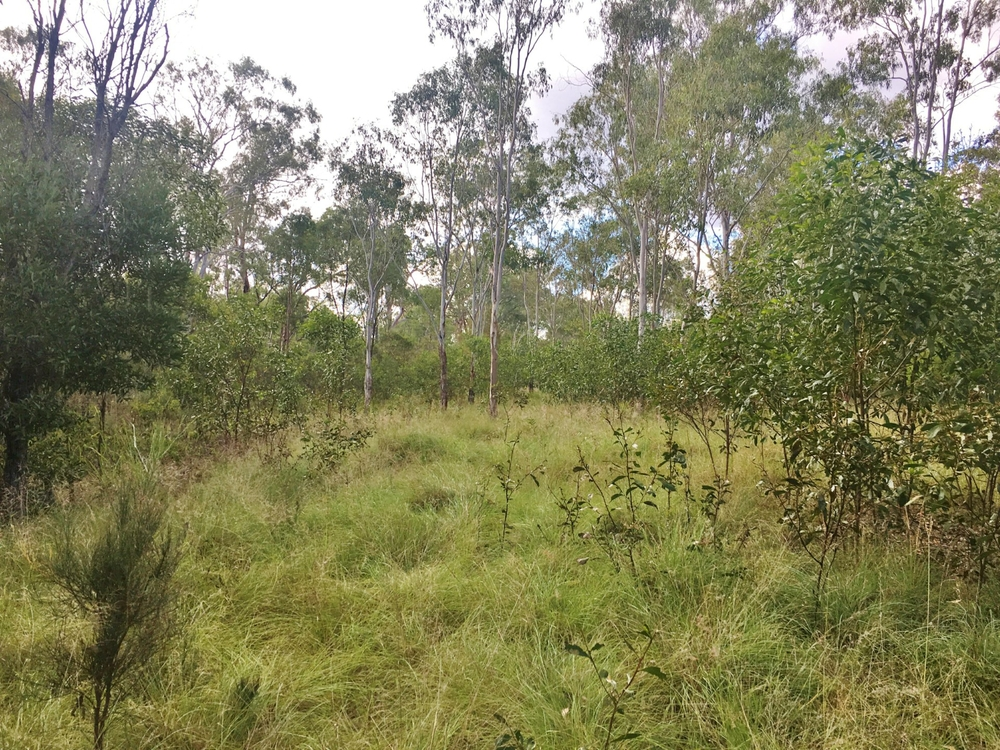 Lot 1 Sandy Ridges Road Nanango, QLD 4615