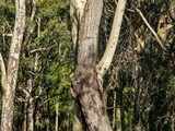 Lot 4 Bunderra Circuit (Lyrebird Hill) Malua Bay, NSW 2536